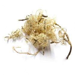 Tropical Terra™ - Curly Moss bielony - 15g