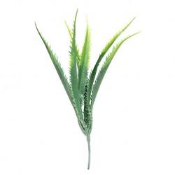 Aloes zielony
