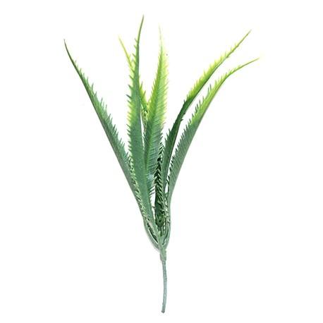 Tropical Terra™ - Aloes zielony