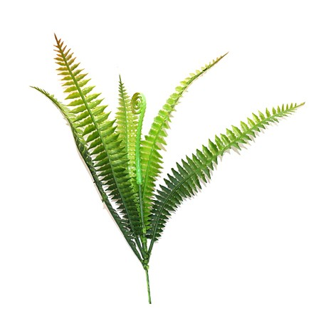 Tropical Terra™ - Paprotka