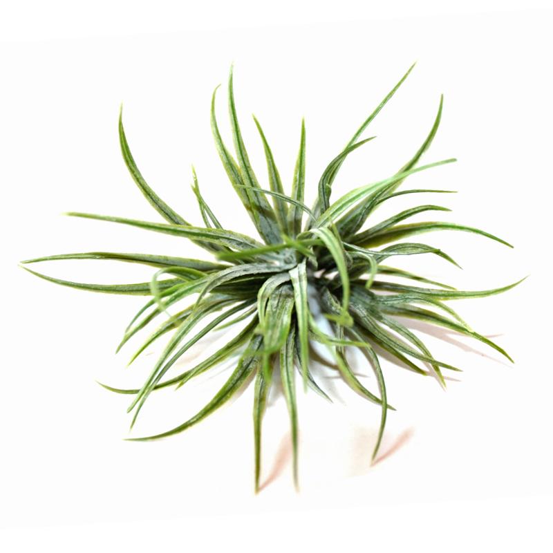 Gęsta kępka trawki - sztuczna dekoracyjna roślina do aranżacji terrarium