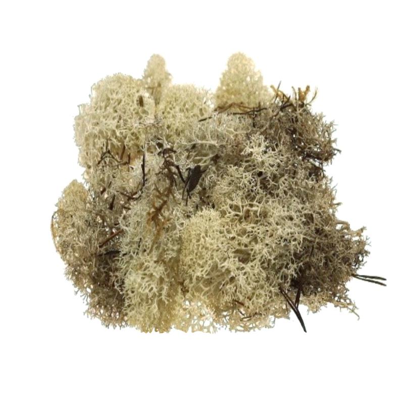 Islandmoss - naturalny porost mchu do dekoracji terrarium, pozyskiwany z najczystszych części Islandii