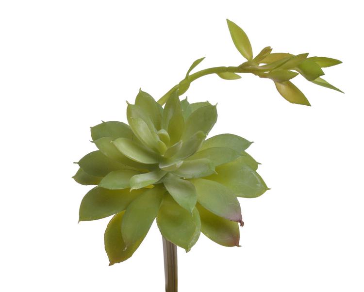 sukulent echeveria - dekoracyjna sztuczna roślina do dekoracji terrarium