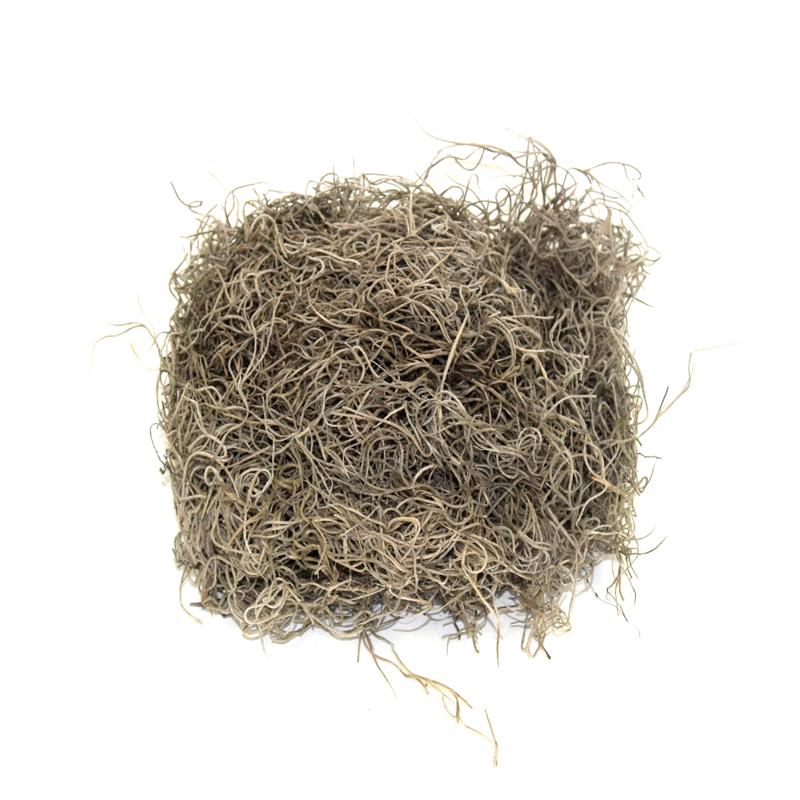 suszona Tillandsia usneoides oplatwa brodaczkowa natural do dekoracji terrarium