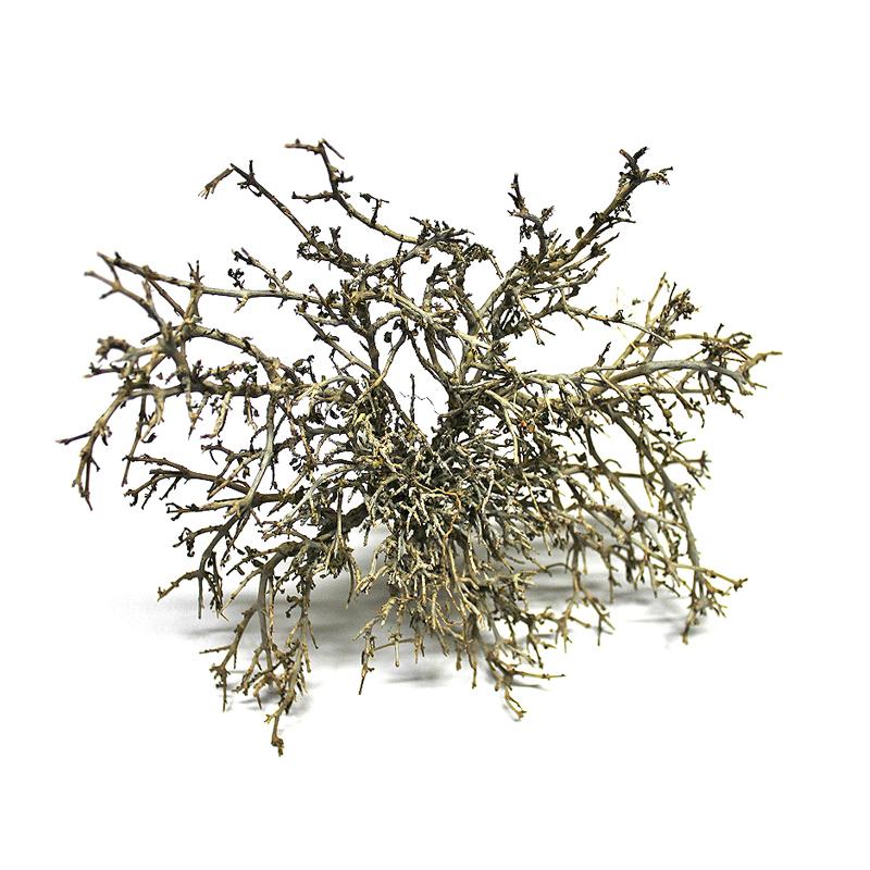 sucha gałązka wrzośca - naturalna dekoracja do aranżacji terrarium