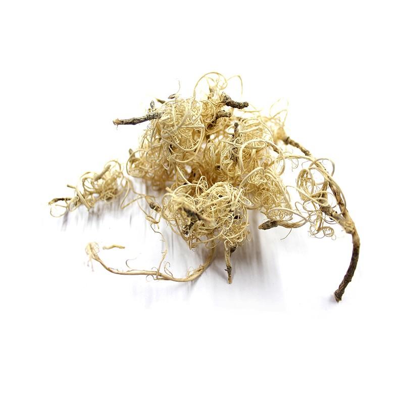 curly moss bielony - naturalny mech suszony do dekoracji terrarium
