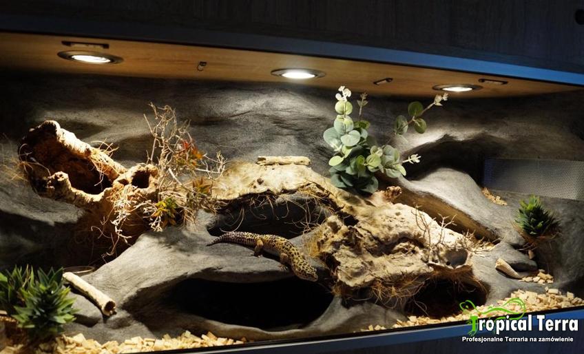 korzonki kopi cone - inspiracja Tropical Terra - przykład aranżacji w terrarium