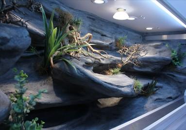 Tropical Terra terrarium inspiracja 3