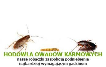 hodowla owadów karmowych Tropical Terra - nasze robaczki zaspokoją podniebienia najbardziej wymagają