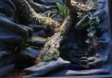 Tropical Terra terrarium inspiracja 2