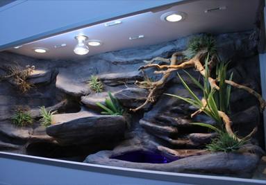 Tropical Terra terrarium inspiracja 1